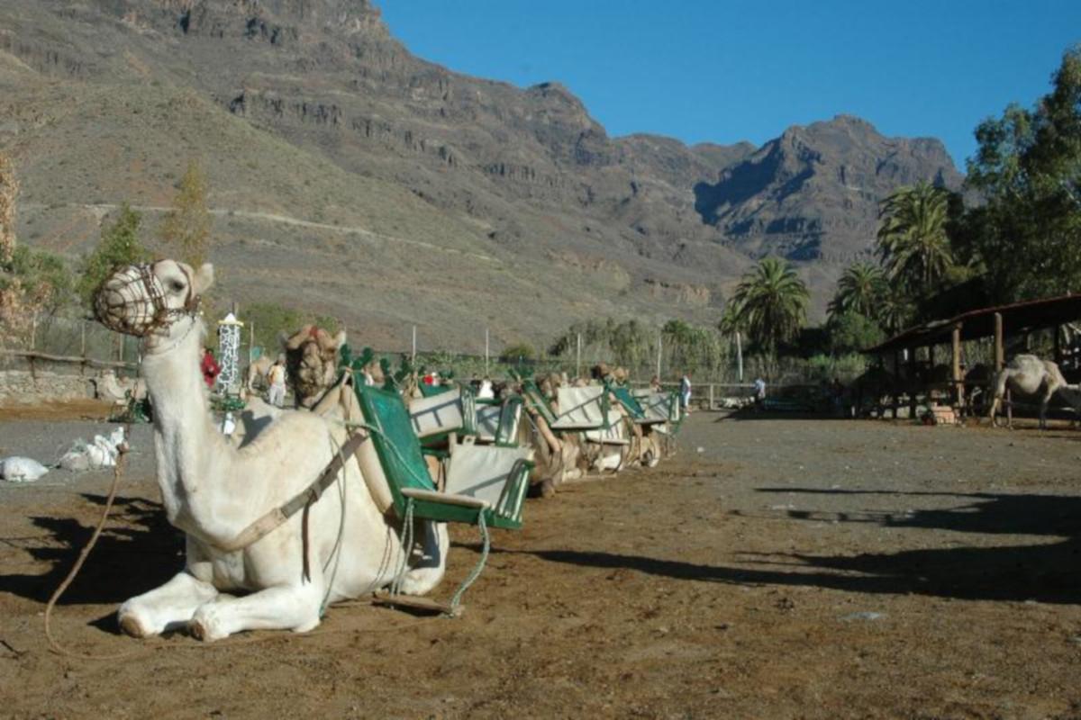 Camel safari with BBQ